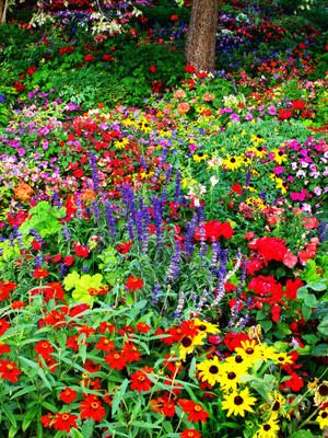Wildflower Garden Landscaping Collection