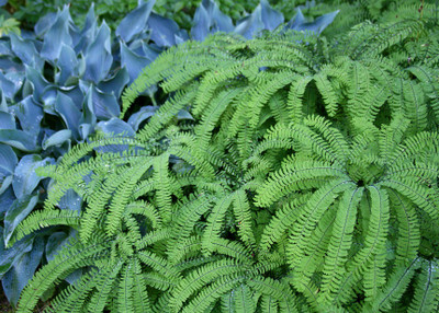 Fern Landscaping Collection