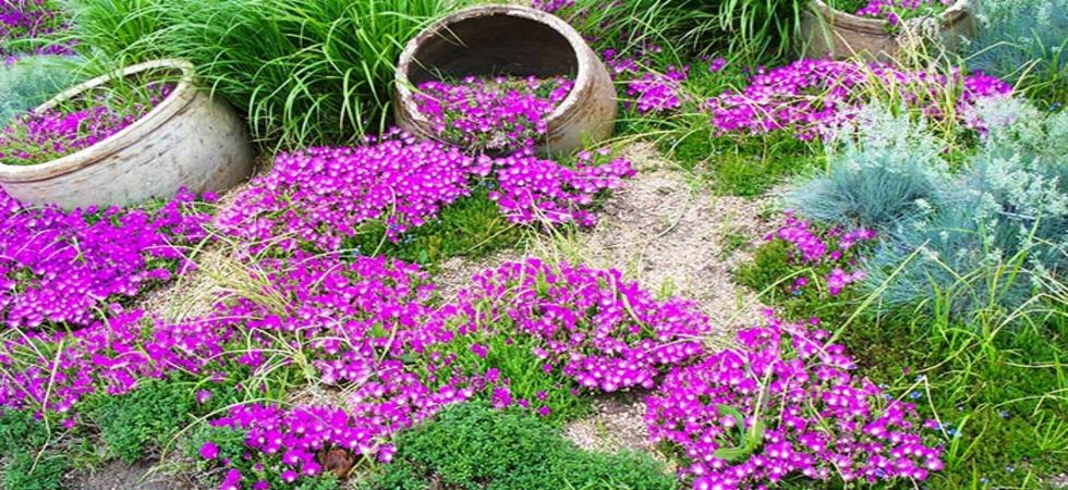 Buy Ground Covers Online