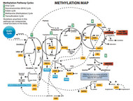 23andme.com MethylGenetic or Genetic Methyl Nutrition Analysis Consultation