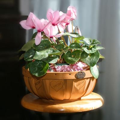 Peterboro Mom's Oxford Planter Basket
