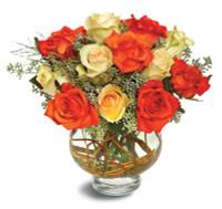 Harvest Moon Roses