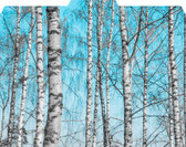 Images shows birch trees on blue sky background of folded File-'N Style Folder with 1/3 cut tab.