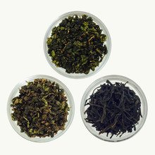 Oolong Sample Collection