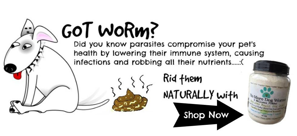 dog worms