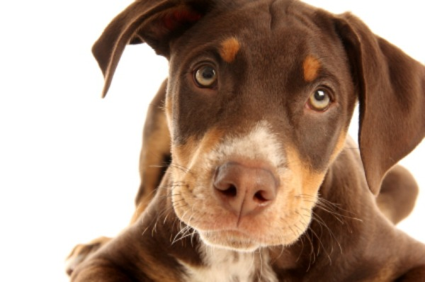 What Homeopathic Remedy Is Good For Separation Anxiety In Dogs