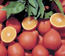 Honeybell Tangelos, Organic, 18 Lb. Box