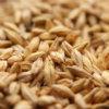 specialty-grain.jpg