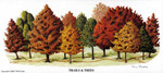 MS-Trails & Trees OE