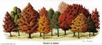 MS-Trails & Trees LE