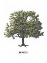 Tree - 4 Seasons - Spring