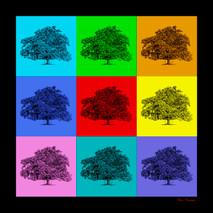 Turner Family Oak - Cane Ridge - squared
