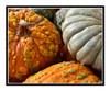 Pumpkin Texture Detail 2556