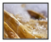 Eggplant Leaf Garden Detail in Winter 2561