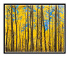 Aspens in Autumn in Aspen, Colorado 176