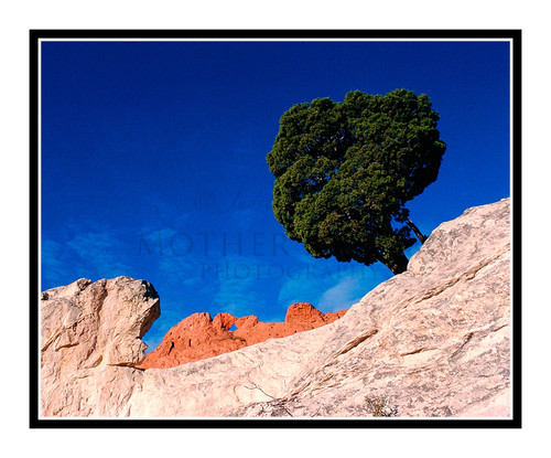 Kissing Camels with Tree  in Garden of the Gods 271