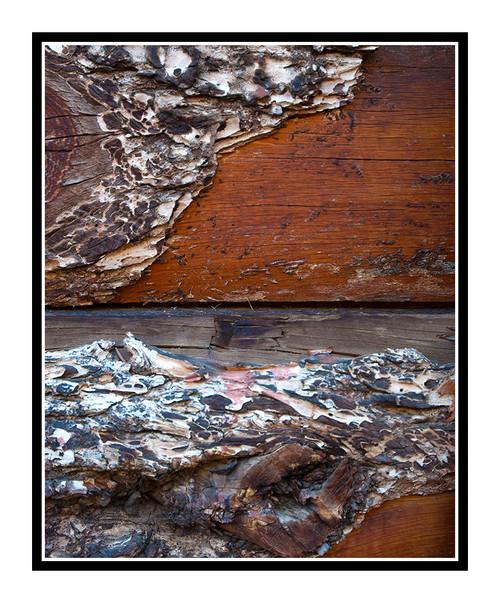 Barnwood Texture Detail, Colorado 2358