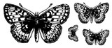 """Large Butterfly (2 7/8"""" x 1 3/4"""")  Small Butterfly (3/4"""" x 1/2"""")"""