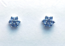 Montana Yogo Sapphire Flower earrings 14K White Gold