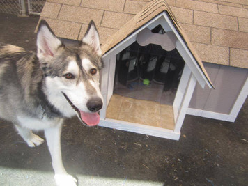 3XL Classic Dog House