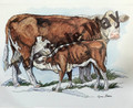 Hereford Cows (8x10)