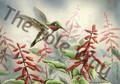 Hummingbird 1 (5x7)