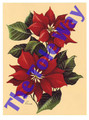 Poinsettia (6x8)