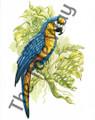Blue Parrot (8x10)