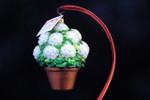 White Geranium Plant NEW 2015