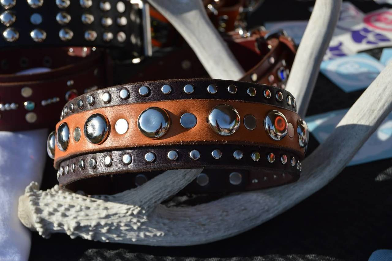 Motion Picture Dog Collar w/ Studded Edges