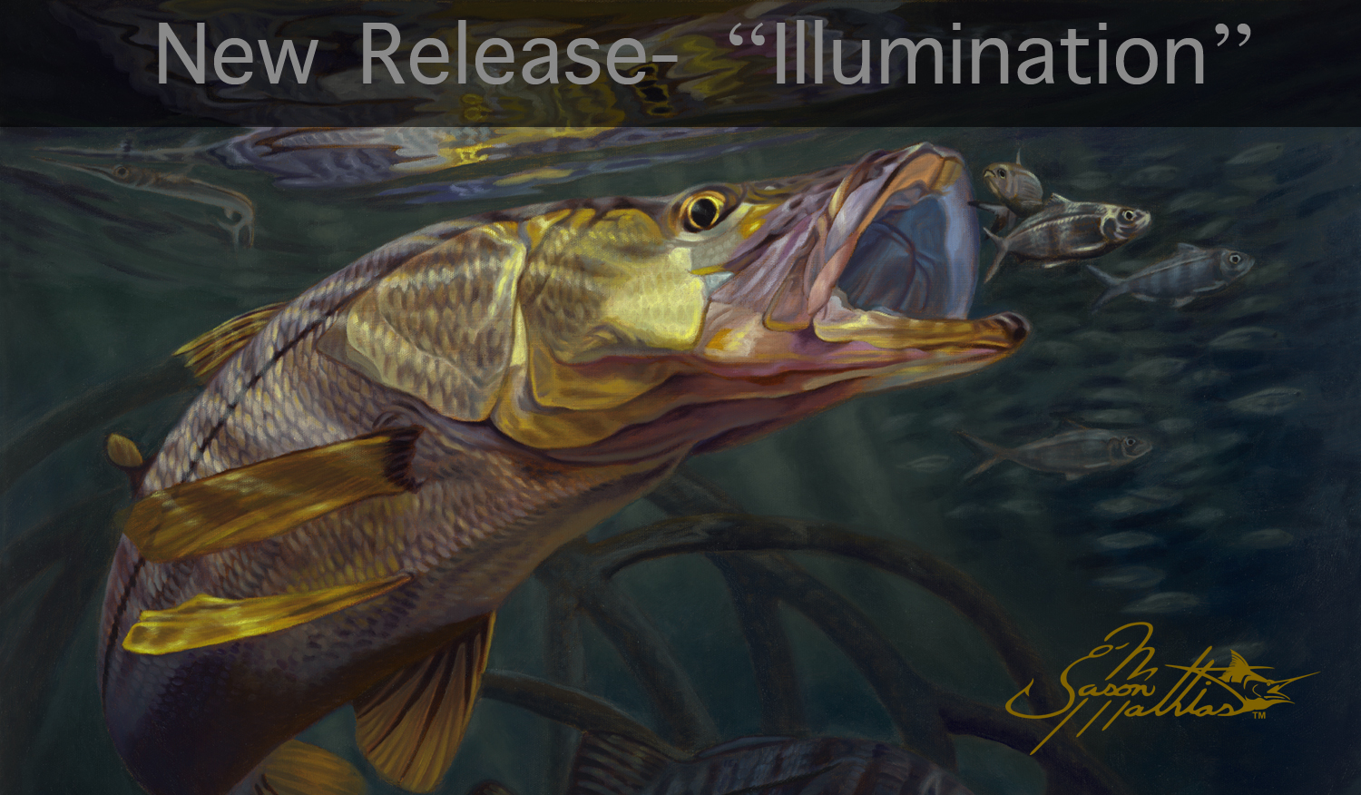 underwater, snook, greenies, baitball, mangroves, art, painting, prints, inshore fishing, gamefish art, sportfish art, jason mathias