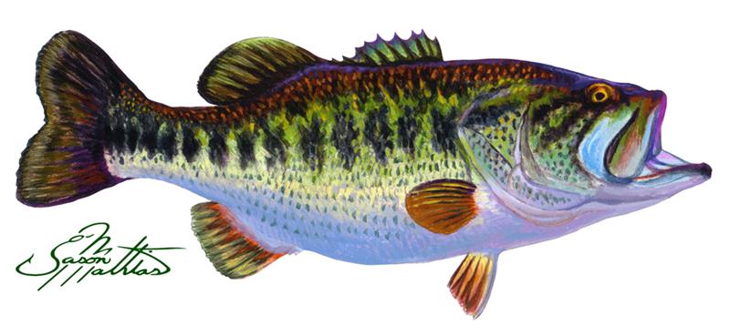 bass-art-jason-mathias-art.jpg
