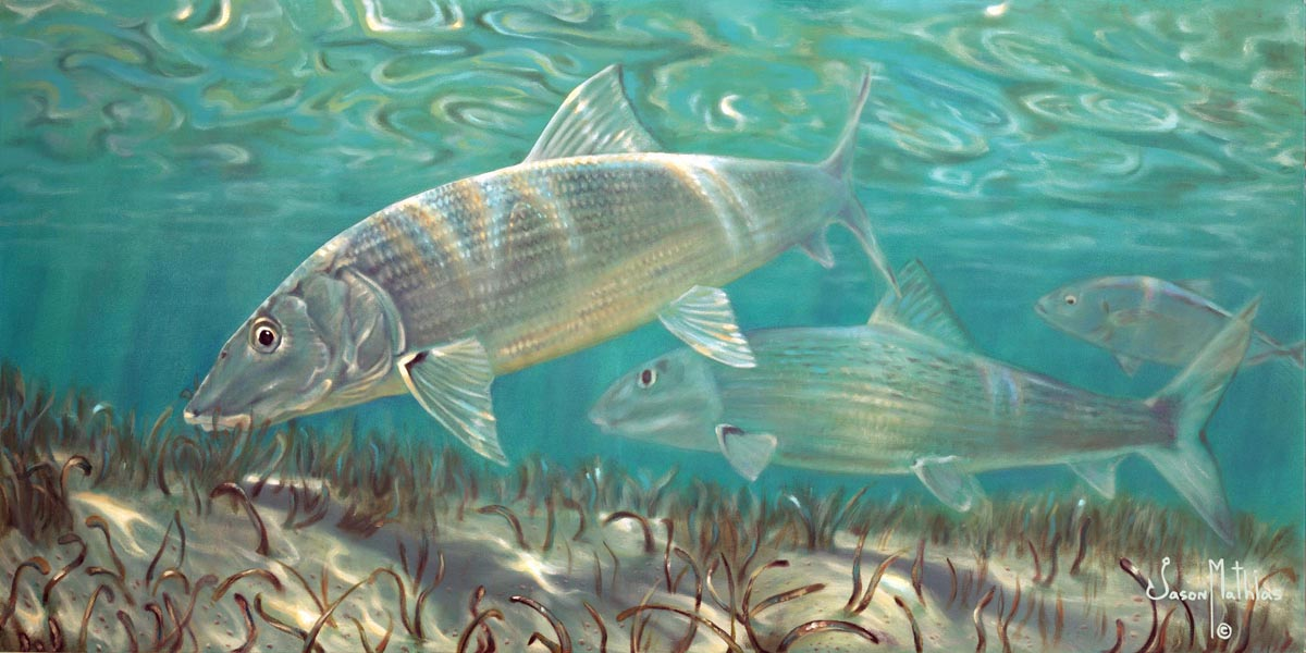 Ghost flats bonefish jason mathias studios for Fish without bones