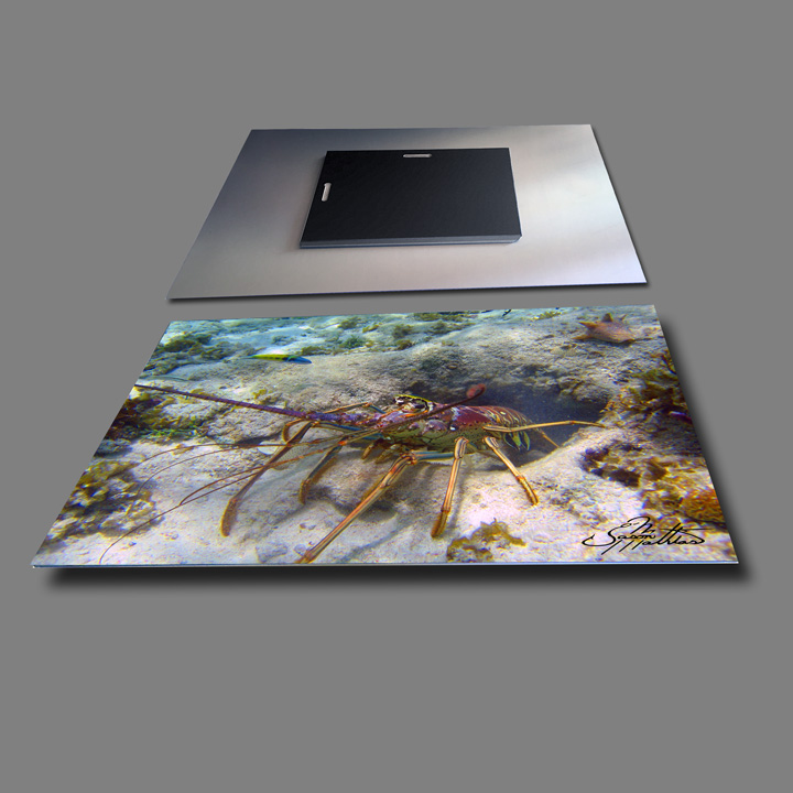 jason-mathias-metal-photo-prints-lobster.jpg