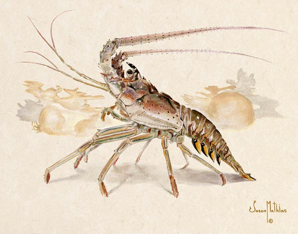 spiny-lobster.jpg