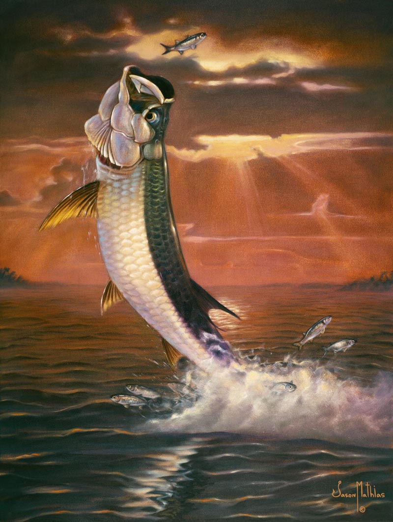 tarpon-sunset-jason-mathias.jpg