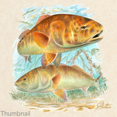Redfish art