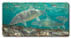 Jason Mathias Heavy Duty Aluminum Metal License Plates! Artwork of a bonefish salking the flats is Featured in a Radiant Shiny High Gloss! A perfect gift for the avid fisherman who enjoys sportfishing, gamefish and art.