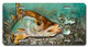 Jason Mathias Heavy Duty Aluminum Metal License Plates! Artwork of a Snook is Featured in a Radiant Shiny High Gloss! A perfect gift for the avid fisherman who enjoys sportfishing, gamefish and art.