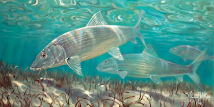 In this vision, skilled artist Jason Mathias masterfully portrays two streamlined Bonefish stalking a billowing grass flat.