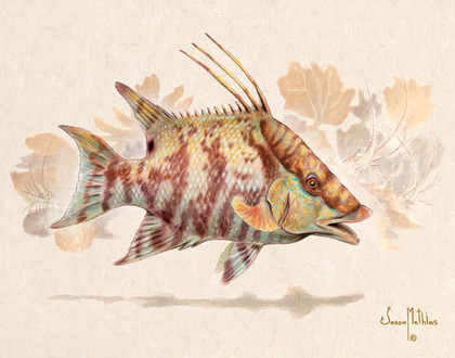 In this vision, skilled artist Jason Mathias masterfully portrays a Hogfish changing its patterns to blend into a lightly suggested reef.