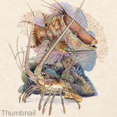 """(Original) """"Hogfish Lobster"""" (SOLD)"""