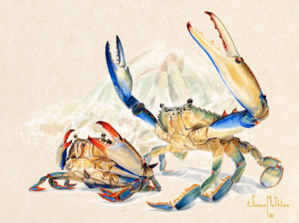 In this vision, skilled artist Jason Mathias masterfully portrays a male Bluecrab defending his mate with a lightly suggested mangrove habitat in the background.