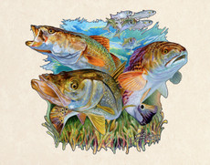 In this vision, skilled artist Jason Mathias masterfully portrays a beautiful and accurate rendition of an interacoastal backwater environment featuring the three most prized species, Redfish, Snook and Trout.