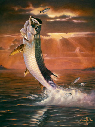 In this vision, skilled artist Jason Mathias masterfully portrays a shimmering Tarpon framed against a blazing sunset as it leaps for a Silver Mullet.