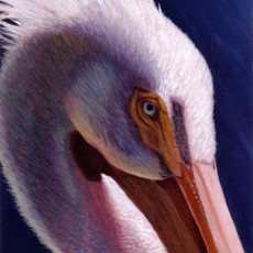 "(Original) ""White Pelican"" (SOLD)"