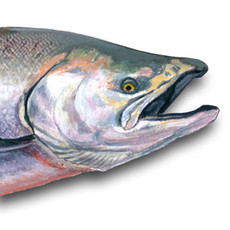 "(Original) ""Chinook Salmon"" (Available)"