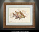 """""""Framed prints"""" by artist Jason Mathias masterfully portrays a Hogfish changing its patterns to blend into a lightly suggested reef. This item features """"Hogfish"""" in a Large framed limited giclee paper print. Print size is """"17x23"""", frame size is """"29.5x35.5"""". Beautifully framed with a nice honey color wood finish and professionally doubble matted for that high end museum quality fine art look."""