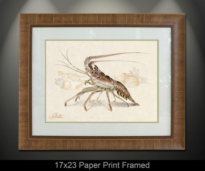 """Framed prints"" by artist Jason Mathias masterfully portrays a Spiny Lobster cautiously marching across the sea floor with a lightly suggested reef in the background. This item features ""Spiny Lobster"" in a Large framed limited giclee paper print. Print size is ""17x23"", frame size is ""29.5x35.5"". Beautifully framed with a nice honey color wood finish and professionally doubble matted for that high end museum quality fine art look."