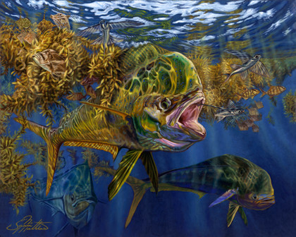"In this pelagic vision, renowned artist Jason Mathias portrays a Mahi Mahi, Dorado or ""Dolphin fish"" working a Sargassum weedline and feeding on flyingfish. If you look closely you can see a Trippletail, Seahorses, Sargassum fish, Filefish, juvenile jacks, and other little critters that you might find in a Sargassum weedline."